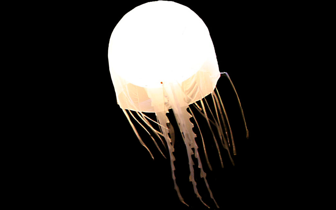 Jellyfish I White